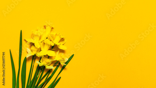 Foto op Plexiglas Narcis Spring floral background. Yellow narcissus or daffodil flowers on yellow background top view flat lay. Easter concept, International Women's Day, March 8, holiday. Card with flowers. Place for text