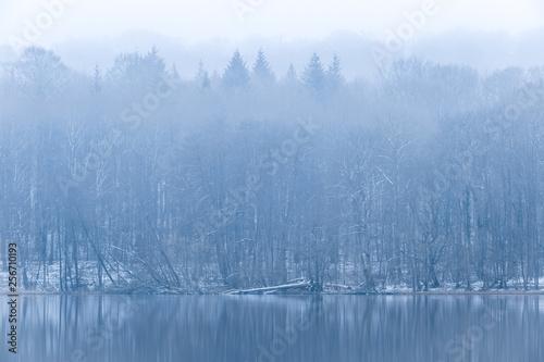Printed kitchen splashbacks Reflection Winterwald am Ukleisee im Nebel, Schleswig-Holstein