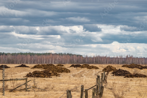 Fotografie, Obraz  Heaps of manure in the field, spring fertilizers ready for spreading