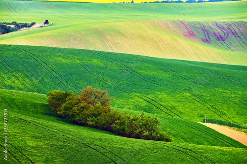 Foto op Plexiglas Groene Spring fields. Green waves. Natural Rural Landscape