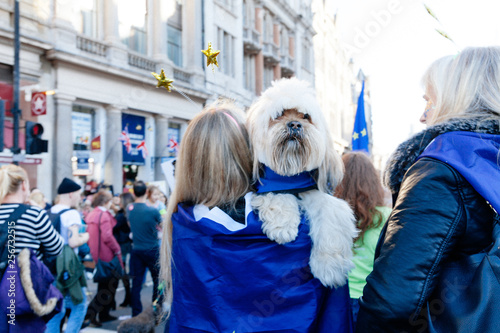 Foto  Dog at the Peoples Vote march in London UK