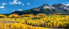 Autumn Aspen Along Ridgway Colorado County Road 5