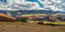 Autumn Aspen On County Road 8 Near Ridgway Colorado Mountains