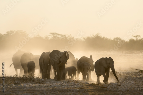 Elephant herd at dusty water hole Canvas Print