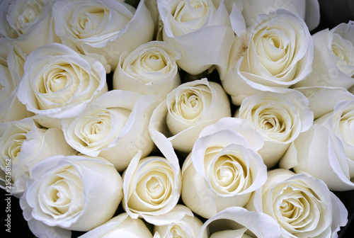white rose flower in bouquet as nature background