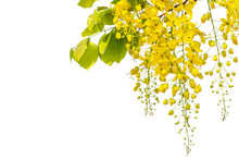 Yellow Coon Flowers On A White Background