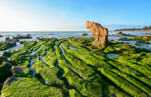 Green Algae On A Rock In The Middle Of The Sea