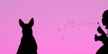 Girl Blows Soap Bubbles On A Bright Purple Background, Fashionable Background, Girl  And Dog Silhouettes