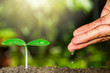 Hand watering green sprout on blurred bokeh background with sunlight, environmental concept