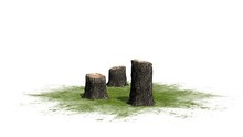 Tree Stump Cluster On A Green ...