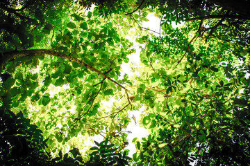 Under the shade of various trees and leaves in the jungle on gap space that is the sky and sun shines