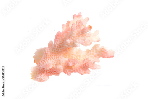 Photo Piece of pink Coral isolated on white background