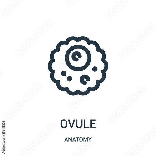 Valokuva ovule icon vector from anatomy collection