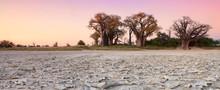 Baines Baobab's In Botswana.