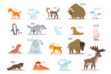 Fototapeta Fototapety na ścianę do pokoju dziecięcego - Set of Arctic and Antarctic animals. Fox, wolf, rabbit, penguin, sable, walrus, bear, husky, musk ox, tern, elephant seal, owl, deer, lynx, snow leopard. Flat vector design