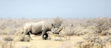 Rhino In Etosha National Park.