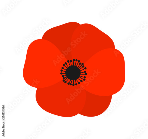 fototapeta na ścianę Red poppy flower.