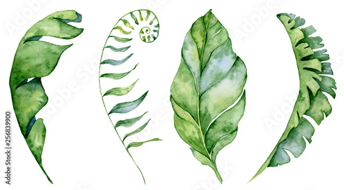 Fotografija  Watercolor monstera leaves set. Tropical plant illustration