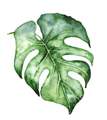 Fototapeta Minimalistyczny Watercolor monstera leaf. Tropical plant illustration