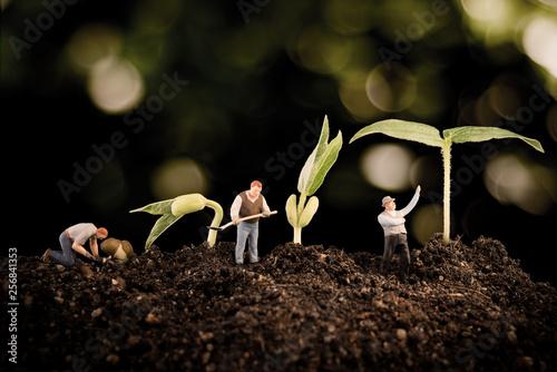Carta da parati  Gardener planting tree , plant growing in soil on bokeh nature background ecolog