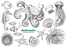 Set Of Underwater Creatures, O...