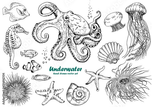 Fotografie, Tablou  Set of underwater creatures, octopus, jellyfish, starfish, seahorse, sea urchin, shells and tropical fishes