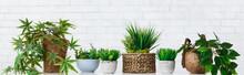 Pot Flowers Hobby Concept