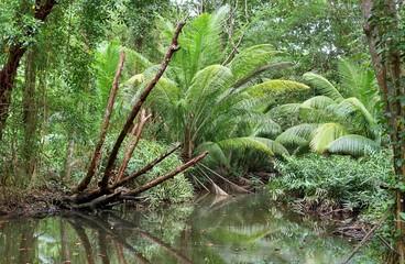 Piękne zielone lasy deszczowe w różnych miejscach na Seszelach