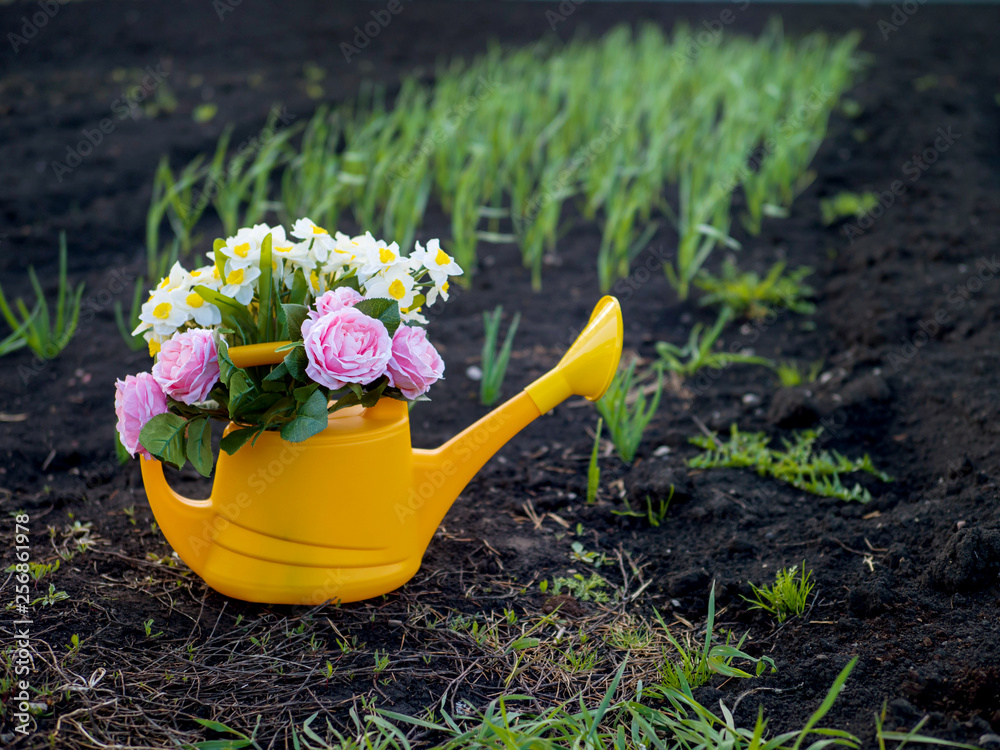 Fototapety, obrazy: Yellow watering can with flowers on the garden