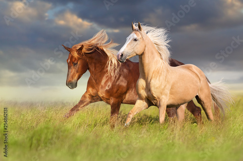 In de dag Paarden Red and palomino horse with long blond mane in motion on field