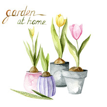 Watercolor Hand Drawn Composition Of Gardening. Plants And Tools. Garden At Home