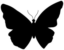 Butterfly Silhouette Icon.