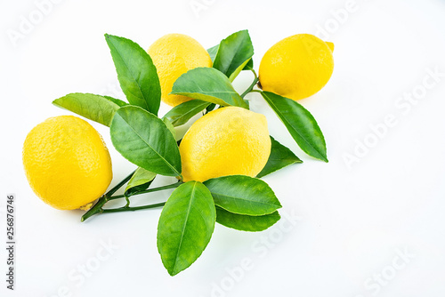 Fototapeta Freshly picked yellow lemon on a white background obraz