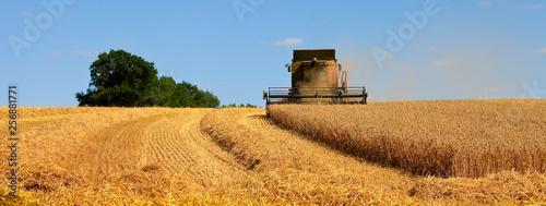 Fototapeta Agriculture en France obraz