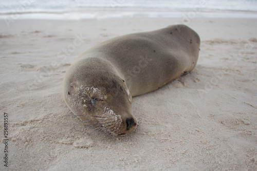 Photo  Sea Lion Close Up