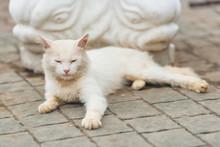 White Cat Lying On The Backgro...