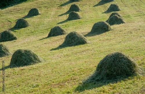 Fotografia agriculture