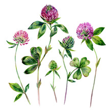 Watercolor Clover Elements