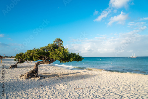 Divi Divi tree on the island of Aruba. Netherlands Antilles фототапет