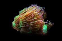 Amazing Elegance Coral - Catal...