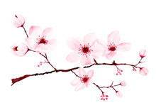 Watercolor Cherry Blossom Bran...