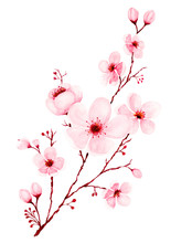 Watercolor Cherry Blossom Branch Hand Painted.