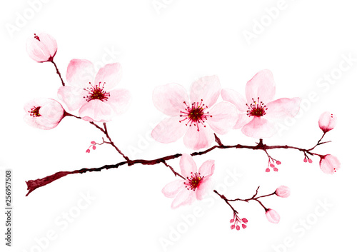 Watercolor cherry blossom branches hand painted. Fotobehang