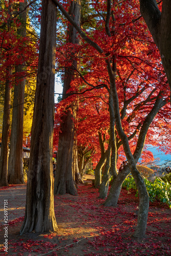 Cadres-photo bureau Rouge mauve Autumn Trees