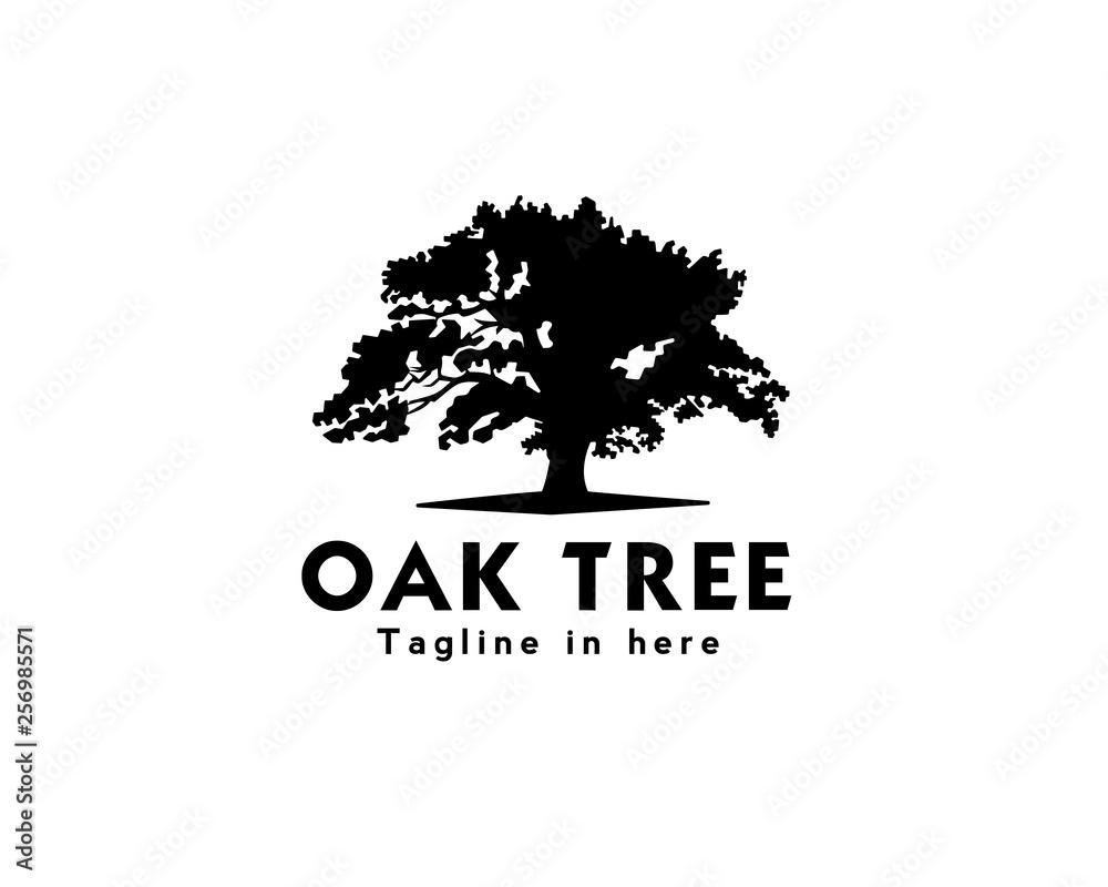 Fotografie, Obraz oak tree logo design inspiration