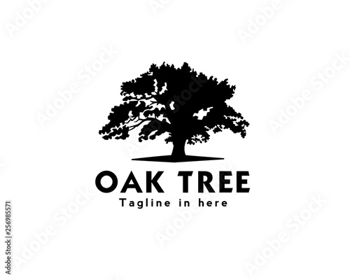 Fotografie, Obraz oak tree logo design inspiration