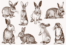 Graphical Vintage Set Of Bunnies ,vector Retro Illustration.