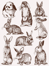 Graphical Vintage Set Of Bunni...
