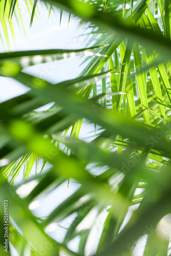 Palm leaves in summertime Wall mural