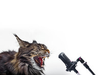 Cat Singing Into The Microphone On A White Background.